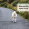 irland rundreise mit auto - wilkommen Bild