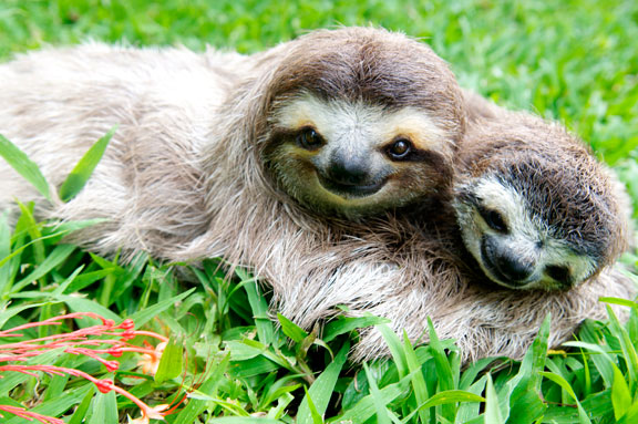 sloth sanctuary Faultiere Auffangstation - Urlaub Costa Rica