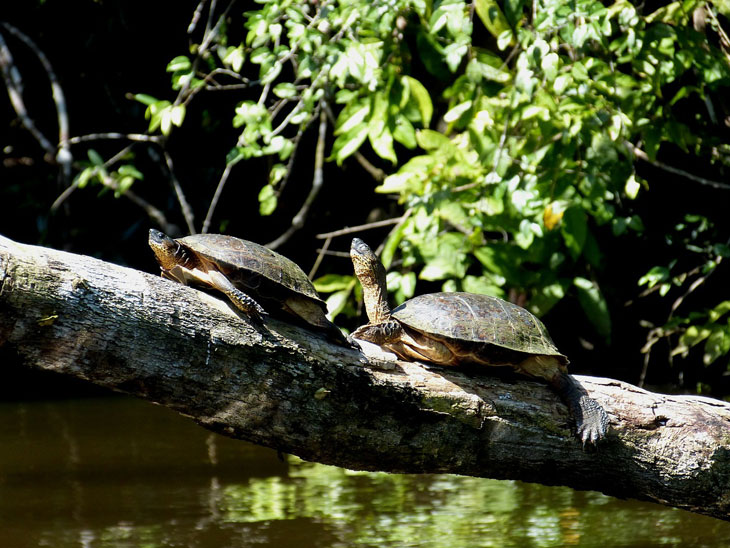 Tortuguero National Park - Urlaub Costa Rica
